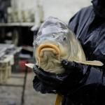 pêche en Dombes